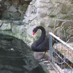 Зоопарк 135
