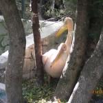 Зоопарк 136