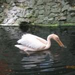 Зоопарк 137
