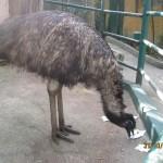 Зоопарк 140