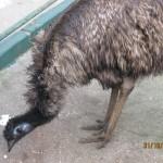 Зоопарк 142