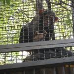 Зоопарк 146