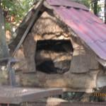 Зоопарк 147