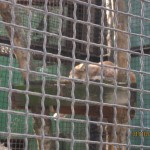 Зоопарк 148