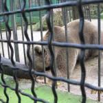 Зоопарк 149