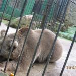 Зоопарк 150