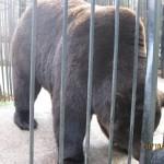 Зоопарк 151