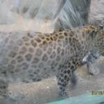 Зоопарк 152
