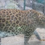 Зоопарк 153
