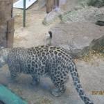 Зоопарк 154