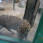 Зоопарк 155