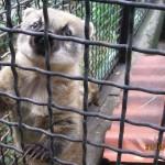 Зоопарк 157