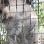 Зоопарк 159