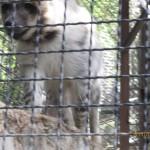 Зоопарк 160