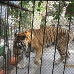 Зоопарк 162