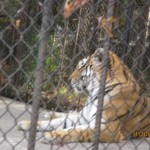 Зоопарк 163