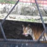 Зоопарк 164