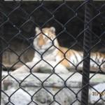 Зоопарк 165