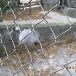 Зоопарк 166