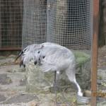 Зоопарк 167