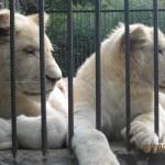 Зоопарк 168