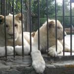 Зоопарк 169