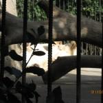 Зоопарк 172