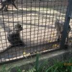 Зоопарк 173
