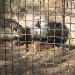 Зоопарк 175