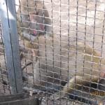 Зоопарк 176