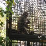 Зоопарк 179