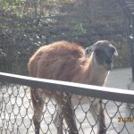 Зоопарк 181