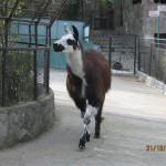 Зоопарк 182