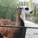 Зоопарк 185
