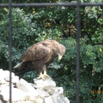 Зоопарк 189