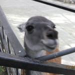 Зоопарк 194