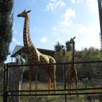 Зоопарк 195