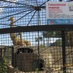 Зоопарк 197