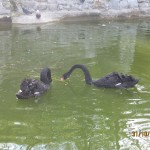 Зоопарк 206