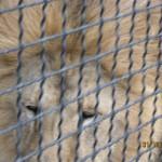 Зоопарк 215