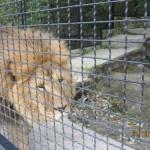 Зоопарк 216