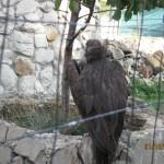 Зоопарк 218