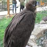 Зоопарк 220
