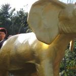 Зоопарк 243