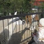 Зоопарк 249