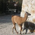 Зоопарк 252