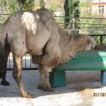 Зоопарк 254