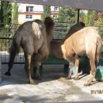 Зоопарк 255