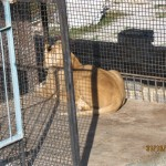 Зоопарк 262