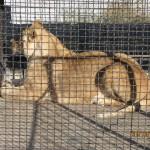 Зоопарк 263